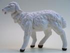 Fontanini 120 036 - Schaf stehend zu 12cm coloriert