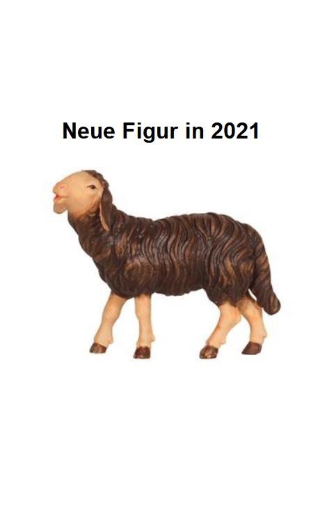 801254s Ko - Schaf fressend Kopf hoch, schwarz