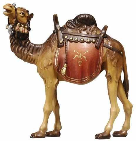 Kamele / Dromedare
